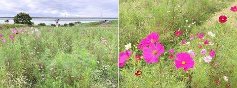 edogawa flower line19101.jpg