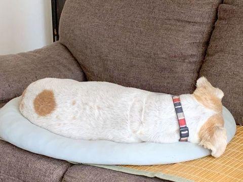 ジャックっぽい犬1908.jpg